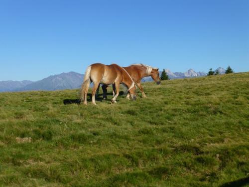 Pferde - mehr Freiheit geht nicht