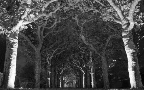 Gruselige Bäume