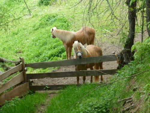 Neugierige Pferde