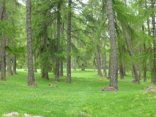 Sehr idyllisch gelegener Wald