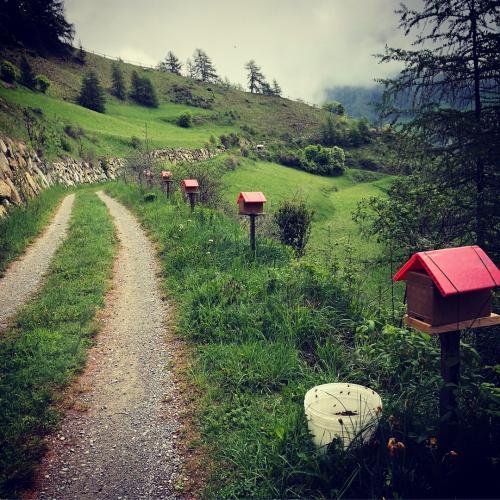 Bienen auf dem Weg